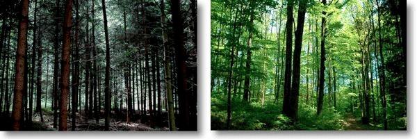 そのための有効な手法が森林の ...